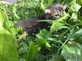 Помогите найти котятам дом