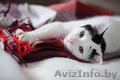 Котенок,  который умеет обниматься,  в дар