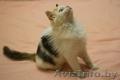 Комочек счастья котенок Мика в дар