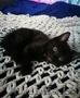 Котенок (девочка) в дар - Изображение #3, Объявление #1643258