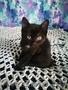 Котенок (девочка) в дар - Изображение #4, Объявление #1643258