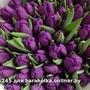 Тюльпаны белорусские оптом по низкой цене.