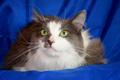 Спасенный кот в дар