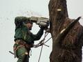 Спил деревьев,  вырубка лесов
