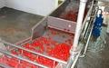"""Линии переработки плодов и овощей """"под ключ"""" - Изображение #4, Объявление #1669618"""