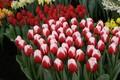 Цветы к 8 Марта оптом
